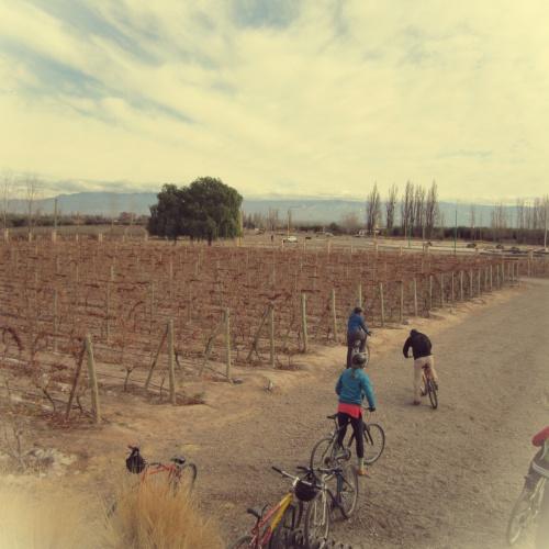 Bicicletas - Mendoza - Argentina - Mochilão América do Sul
