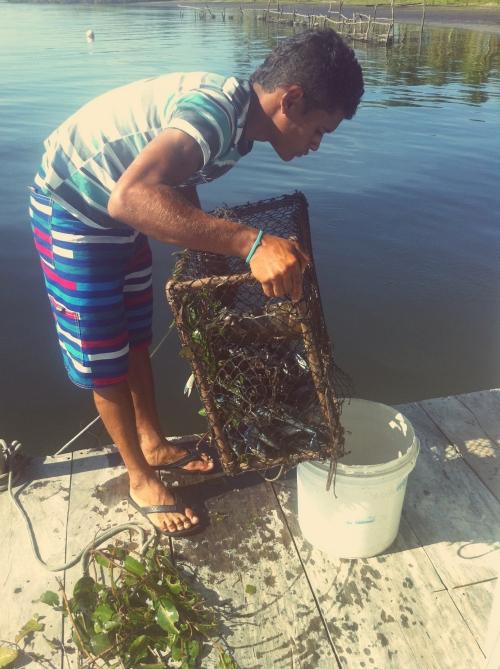 Restaurante flutuante - Retirando as ostras da água